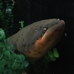 This aquarium exhibit is shocking Twitter