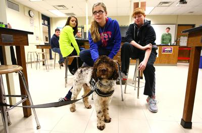 TMS therapy dog