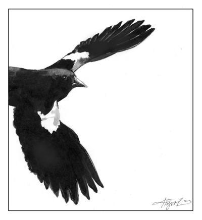 0321 MAG_TOS_Red-WingedBlackbird.jpg