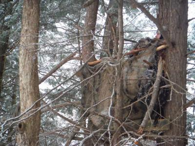 Camo in a tree