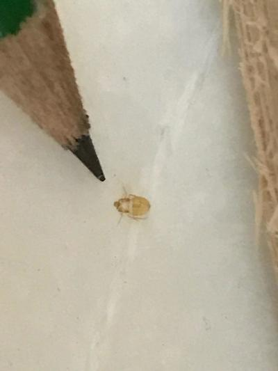 Tick and Pencil.jpg