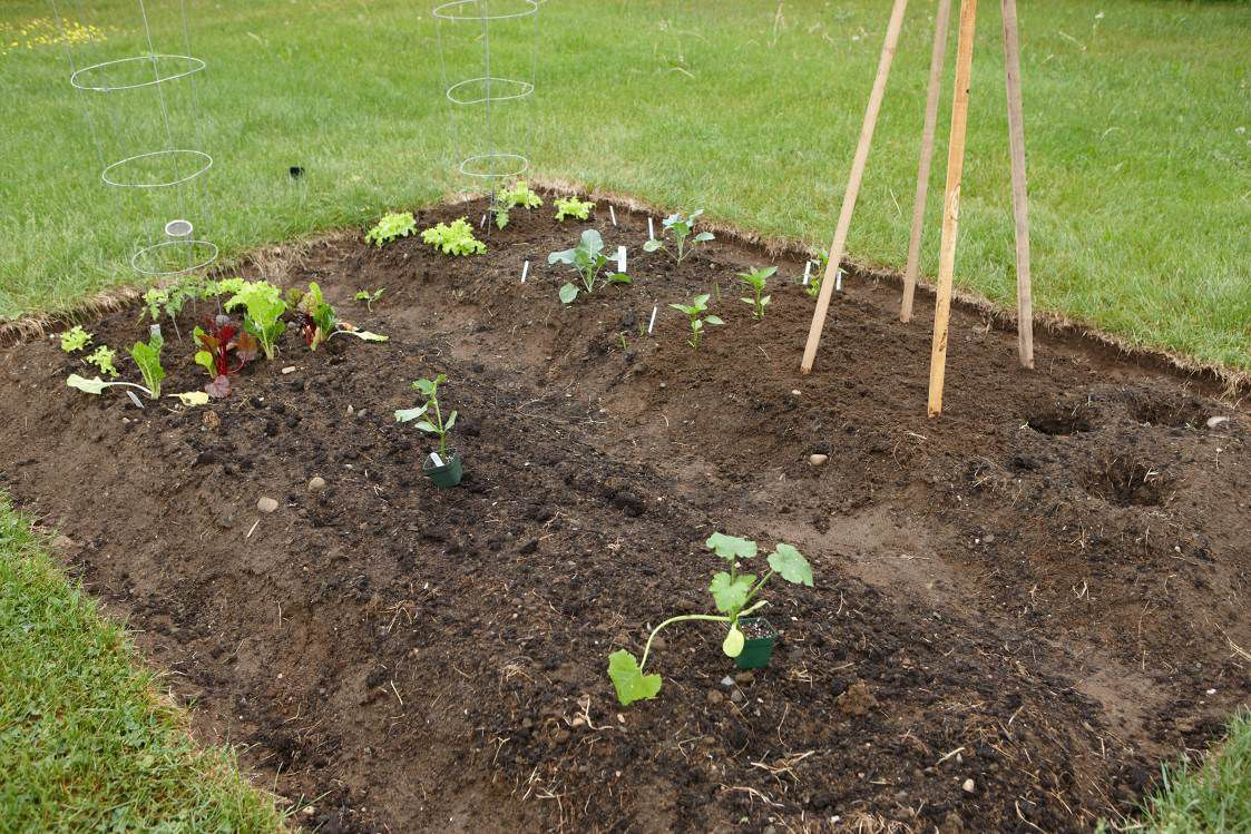 In The Garden Get Ready To Grow Vegetables Weekend Magazine