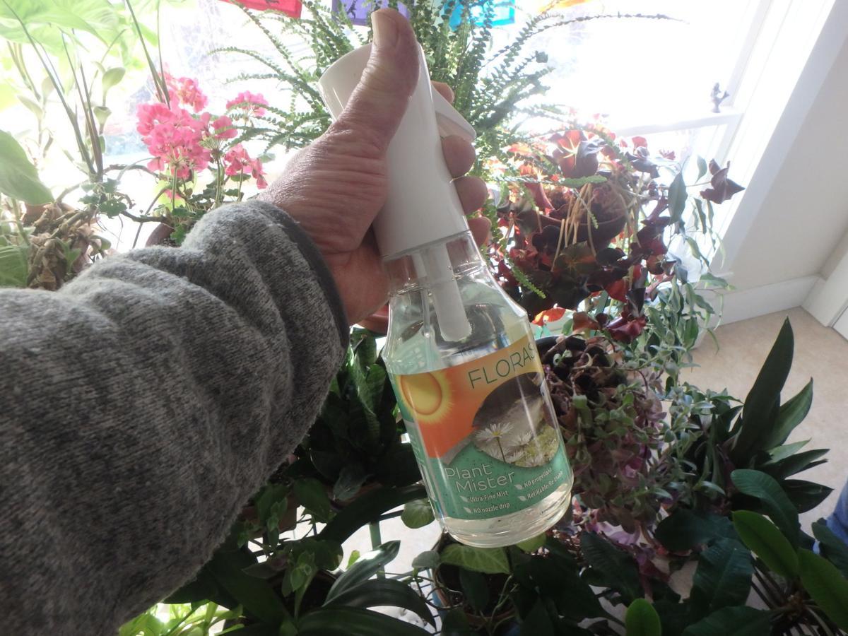 Misting plants helps them in winter.JPG