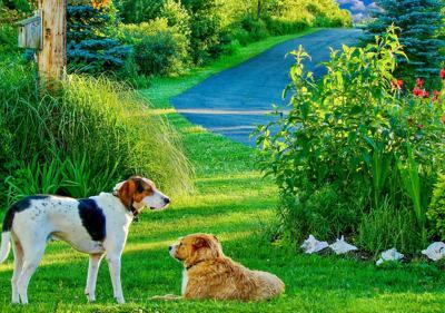 Dogs_N1809P48002H.jpg