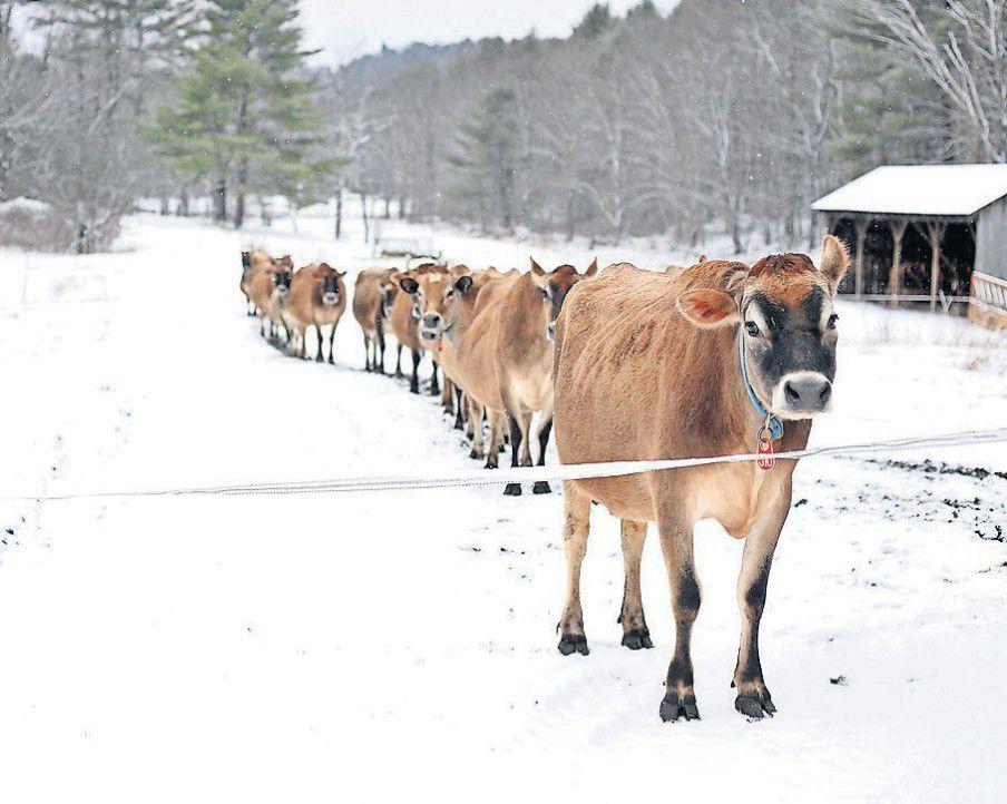 Raw milk advocates push; Vermont farmers frustrated