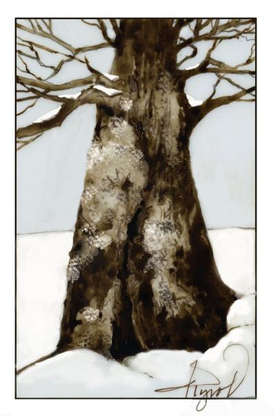 MAG_TOS_Lichen-on-tree.jpg