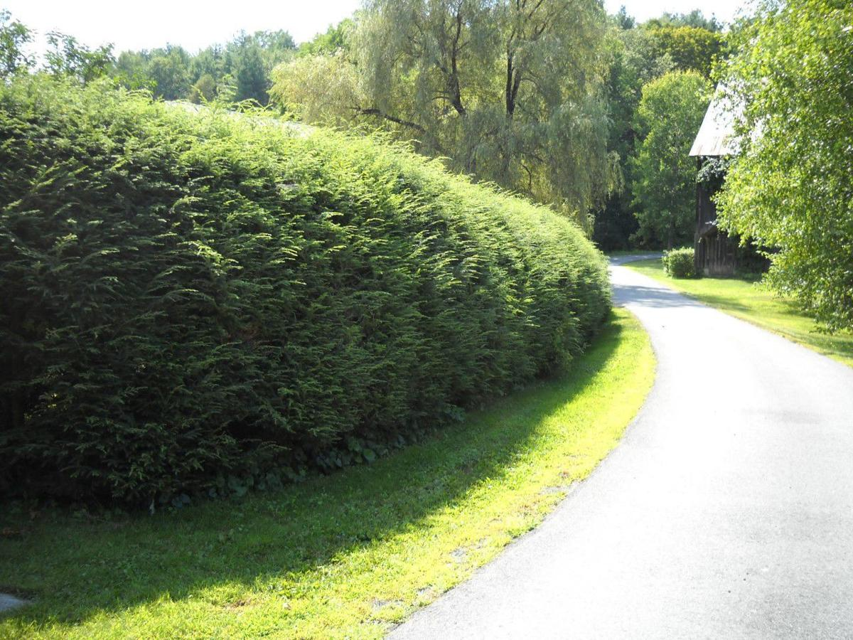 MAG_Avoid pruned hedges in a naturalistic garden. Instead use native shrubs.jpg