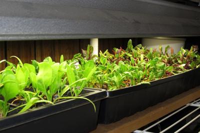 MAG_seedlings.jpg