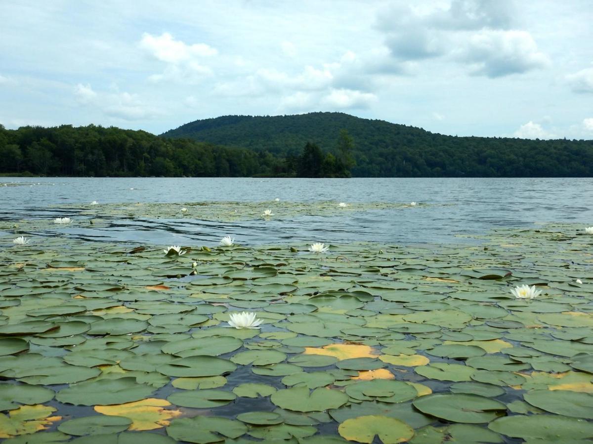 Lake Ninevah
