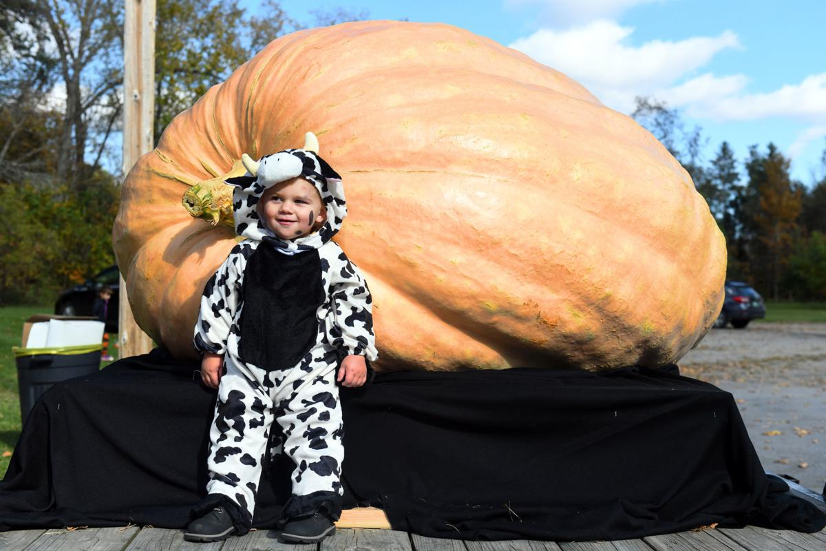 Vermont's first 1-ton pumpkin tips the scales