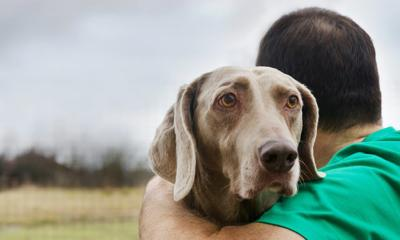 Hospice Care For Animals Is A Growing Trend Among Pet Owners