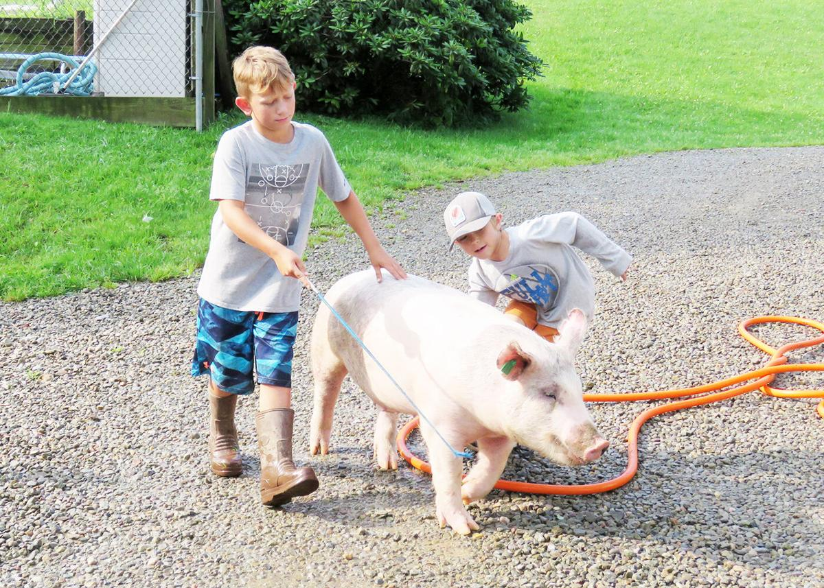 4-Hers at Smiths' farm ready for Catt. County Fair