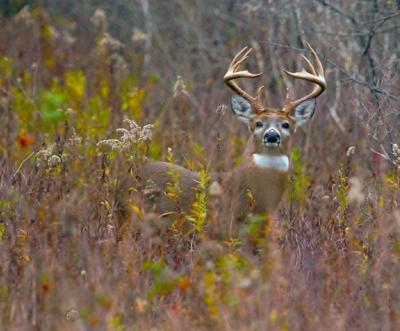 Signs point to good year for NY big game hunters