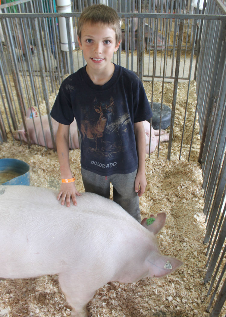 Cattaraugus county fair market class animal sale is aug 4 news 4 h market auction thecheapjerseys Choice Image