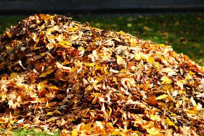 Leaf pick-up schedule in Salamanca begins today