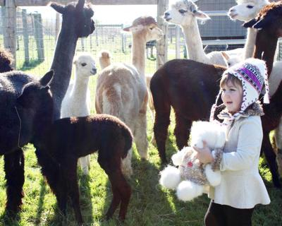 Local farms participate in National Alpaca Farms Days next weekend