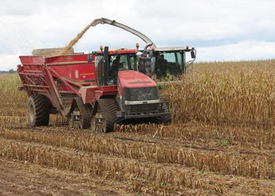 Most Cattaraugus County farmers in middle of fall harvest