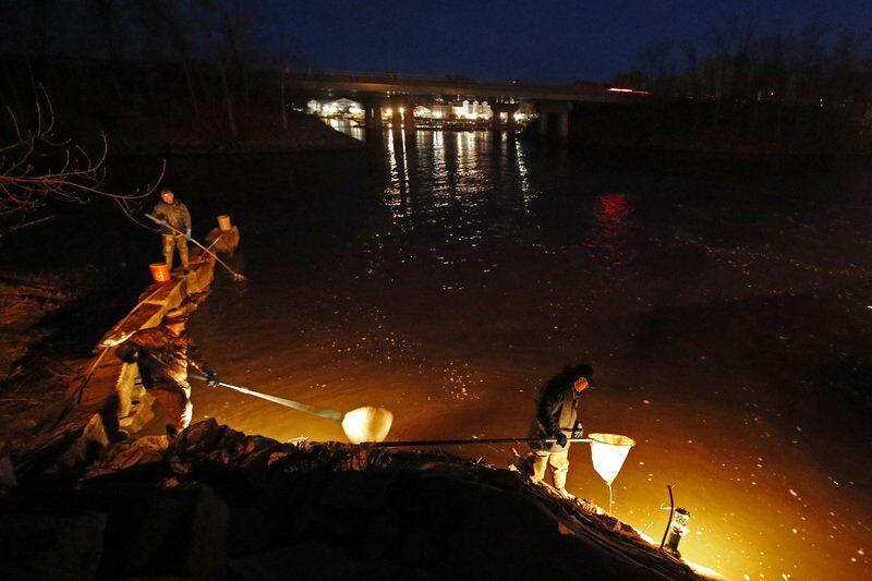 Maine's baby eel fishermen hope forprice bump in2021