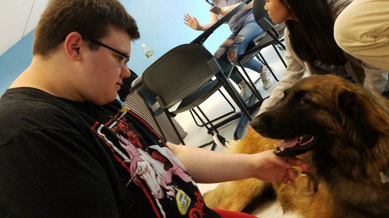 Therapeutic tail-waggers