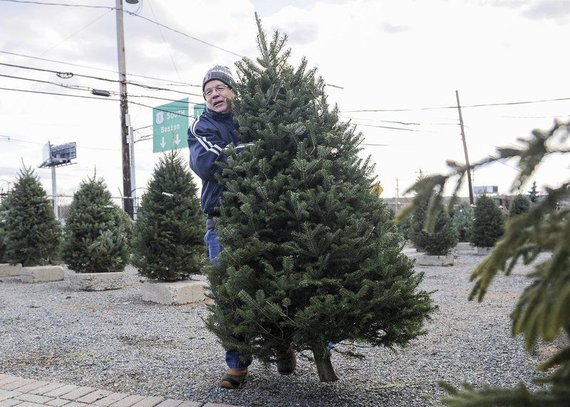 Christmas Trees Peabody Ma 2020 It's a tight market for Christmas trees   Local News   salemnews.com