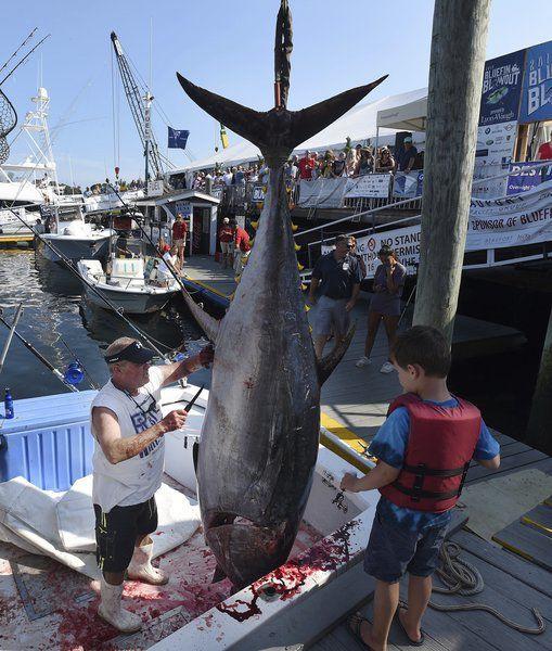 Bluefin Bash success