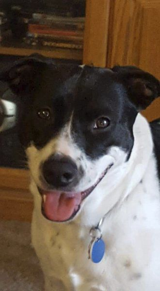 Man balks at sentence for dognapping