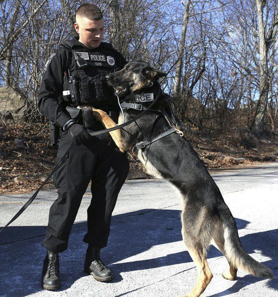 Peabody PD mournsdeath of its K-9, Caine
