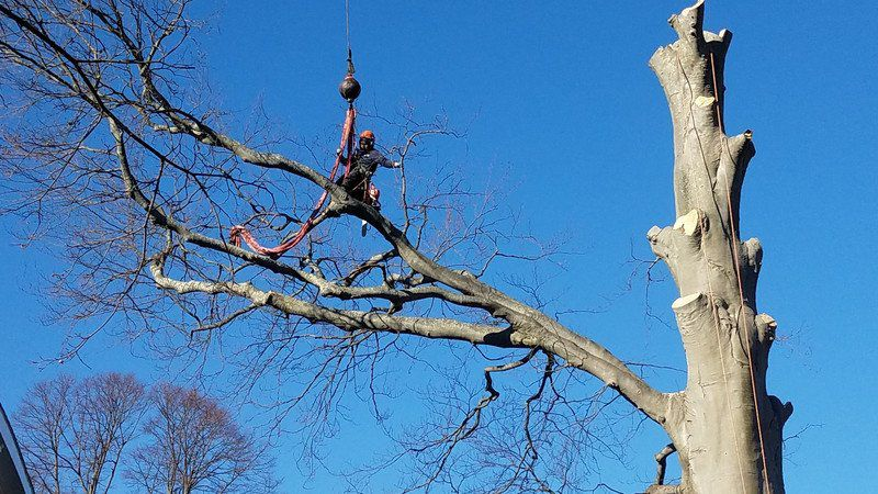 Historic tree to see new life at Artists Row