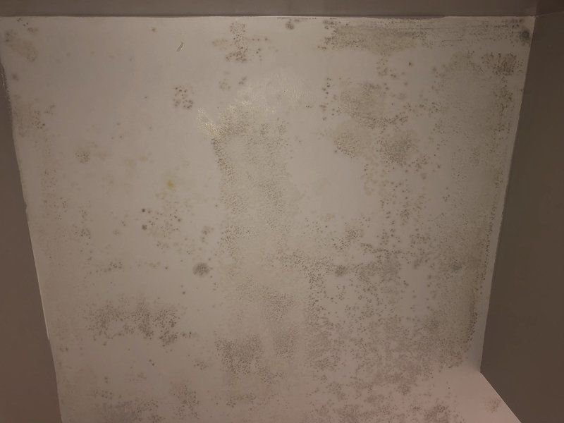 Mold findconcerns SSU's South Campus students
