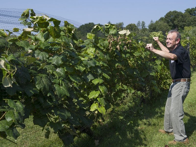 After 20 years, a harvest of plenty at Alfalfa Farm Winery