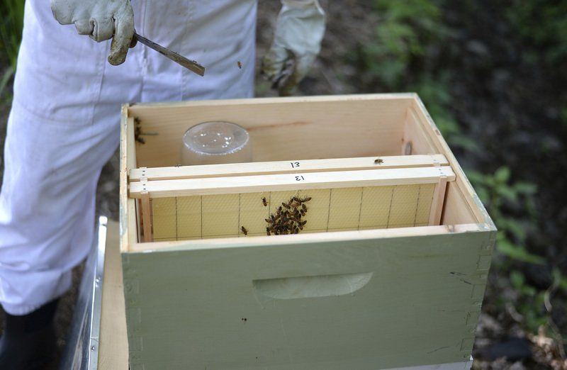 Massachusetts Offers Backyard Bee Keepers Little Help, Oversight
