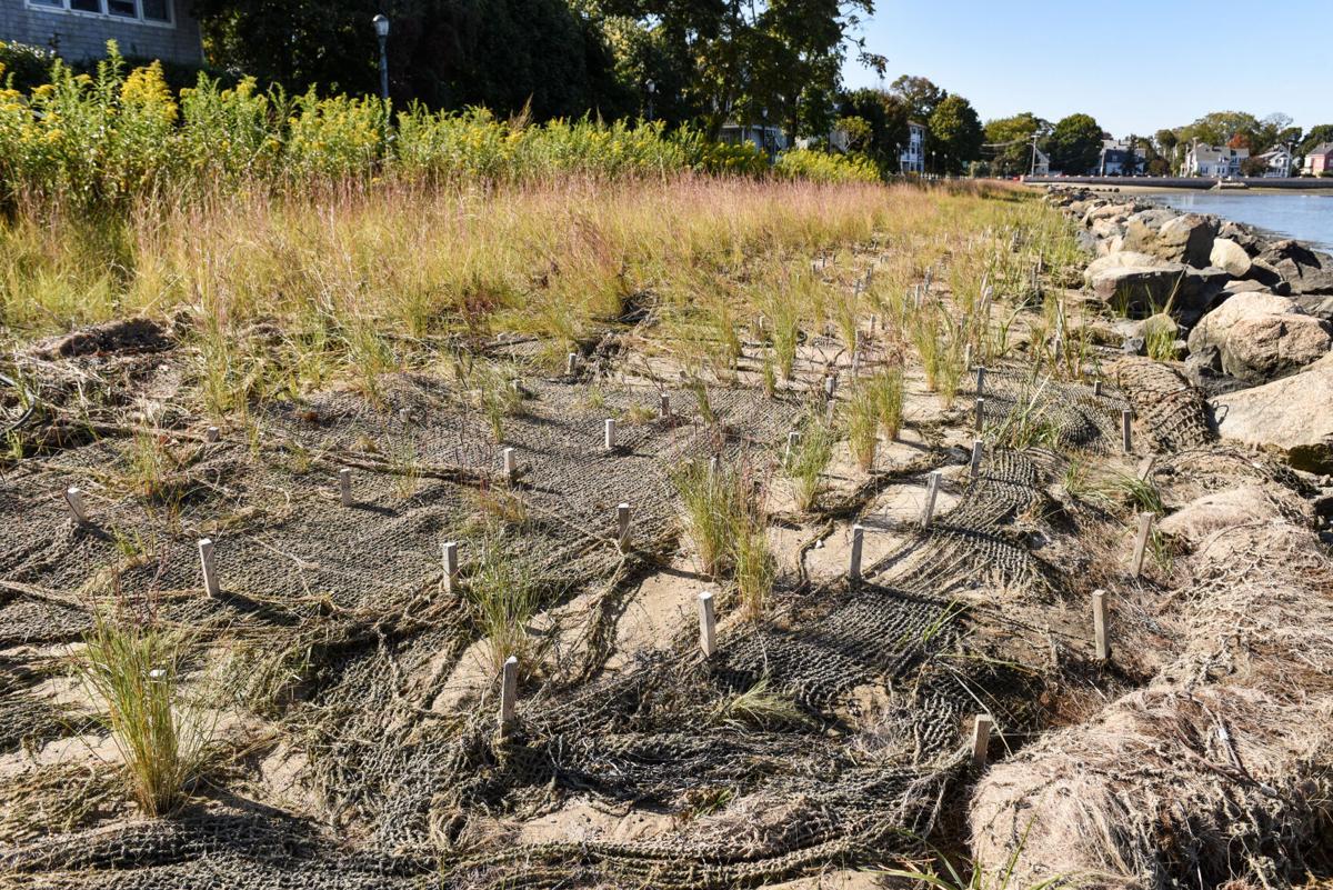 Collins Cove seagrass update