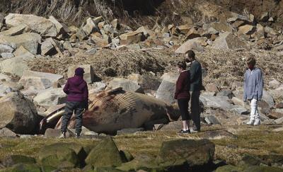 NOAA, cityonwhale carcass: Let nature take its course