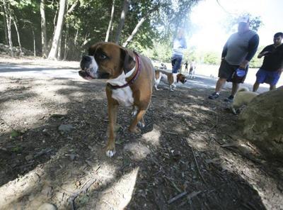 Improvementsslated forDanvers Dog Park