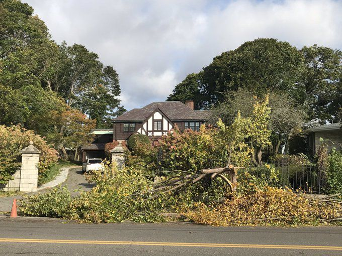 Swampscott tree damage