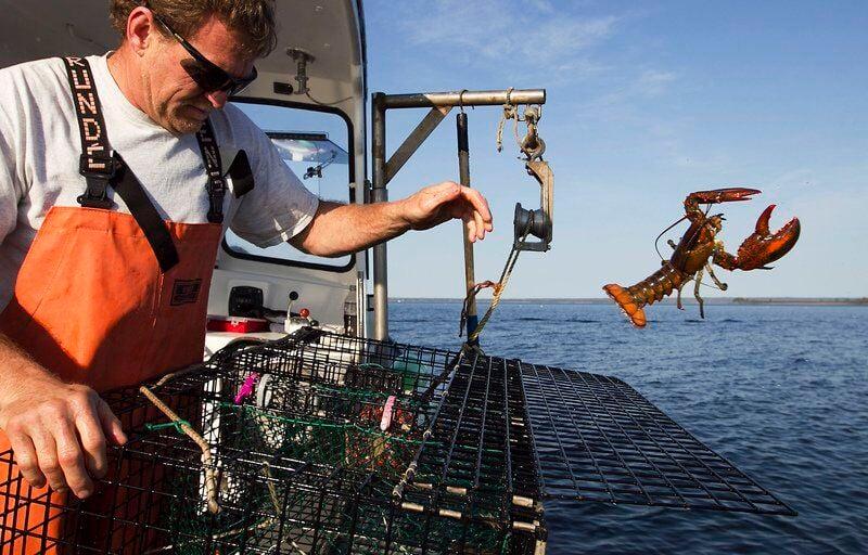 Lobster lovers feeling the pinch as summer nears