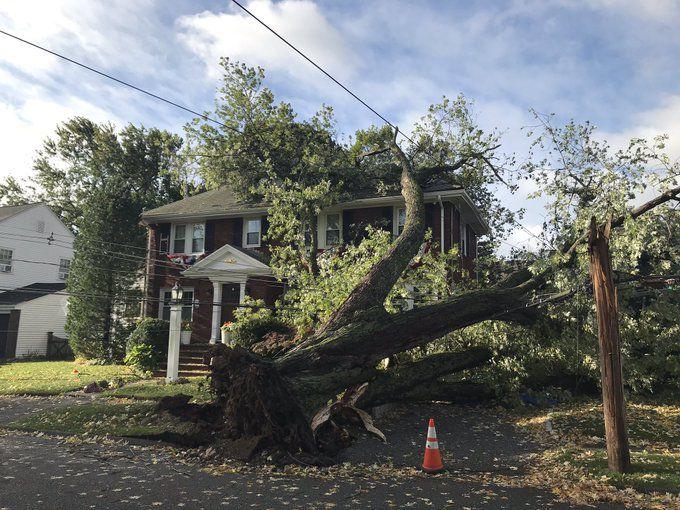 Marblehead storm tree