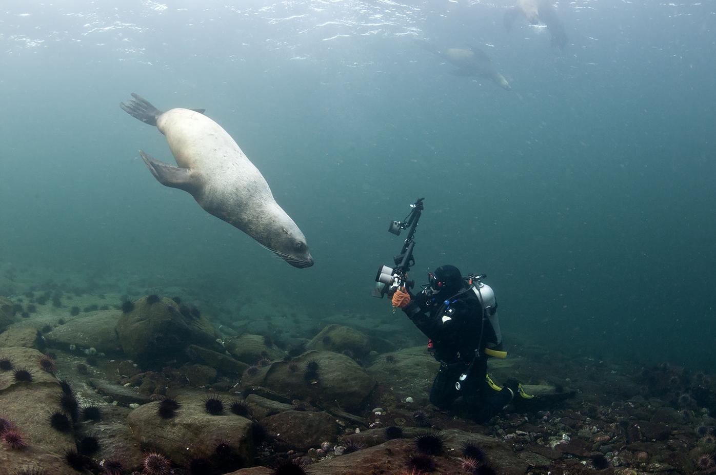 Richard Salas Diving 2