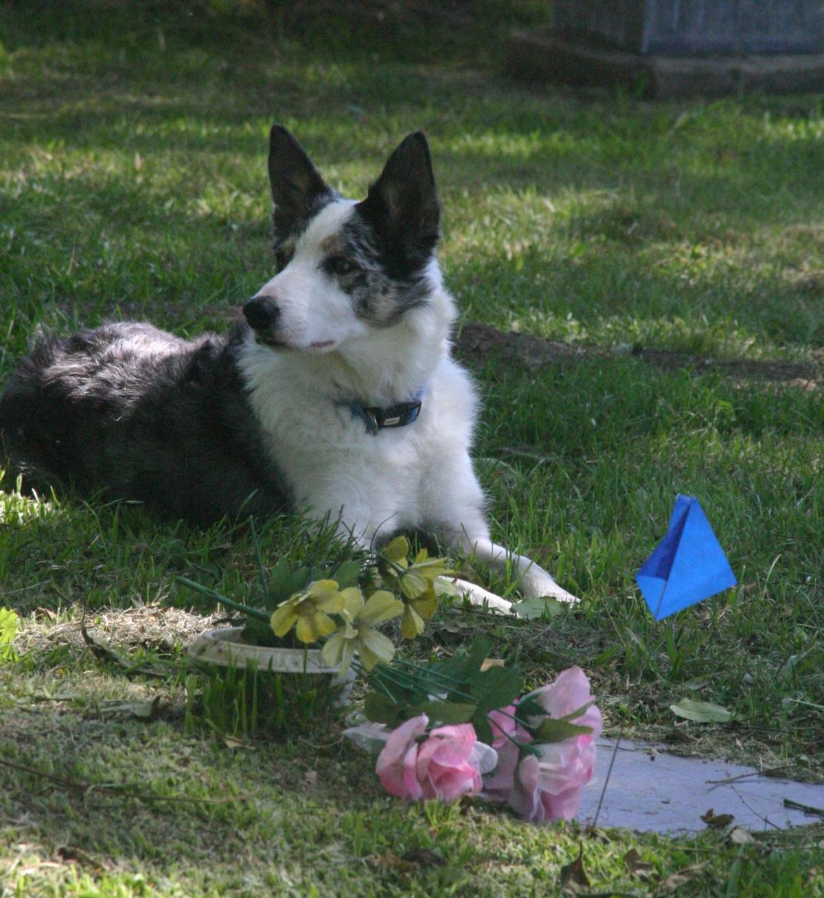 Forensic canines-Jasper at grave