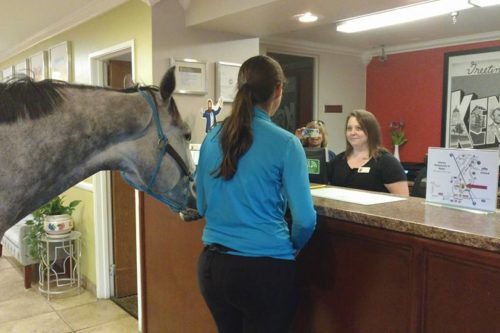 Woman Brings Her Horse To A Hotel After Learning The Place Is 'pet-friendly'