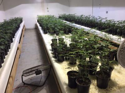 101518 Cebada Canyon marijuana
