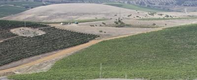 Laetitia vineyards