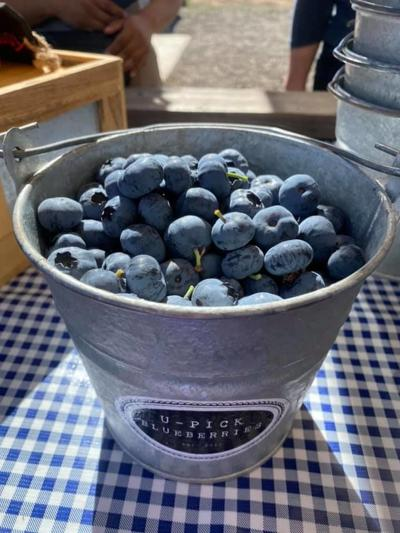 050720 U-Pick Blueberry Farm