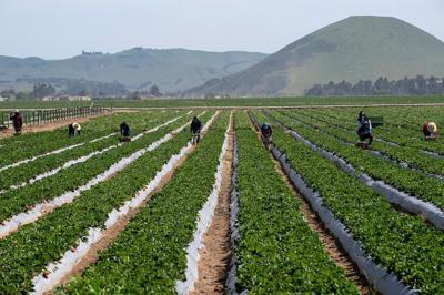 SalinasCalifornian_Farmworkers_2020_03