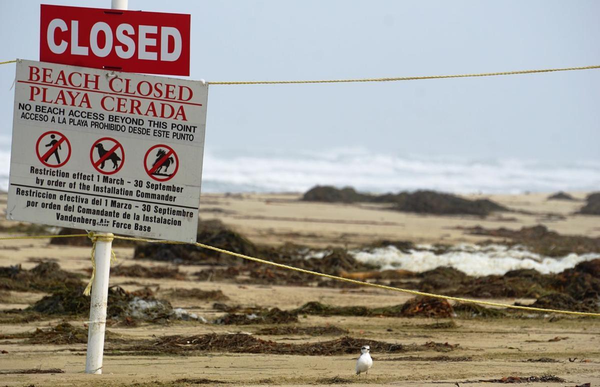 082120 Surf Beach plovers 01