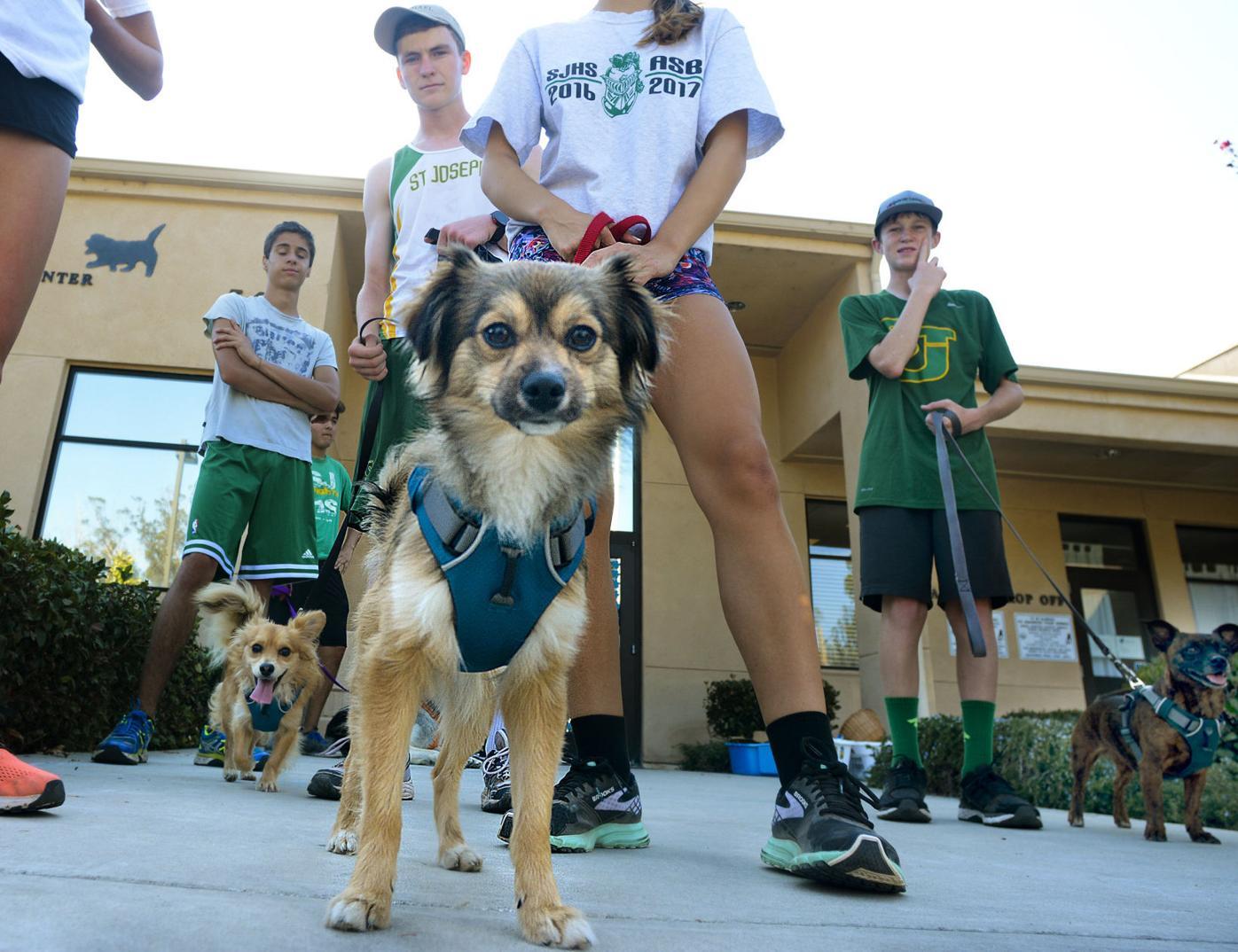 082916 St. Joseph dog runners 02.jpg