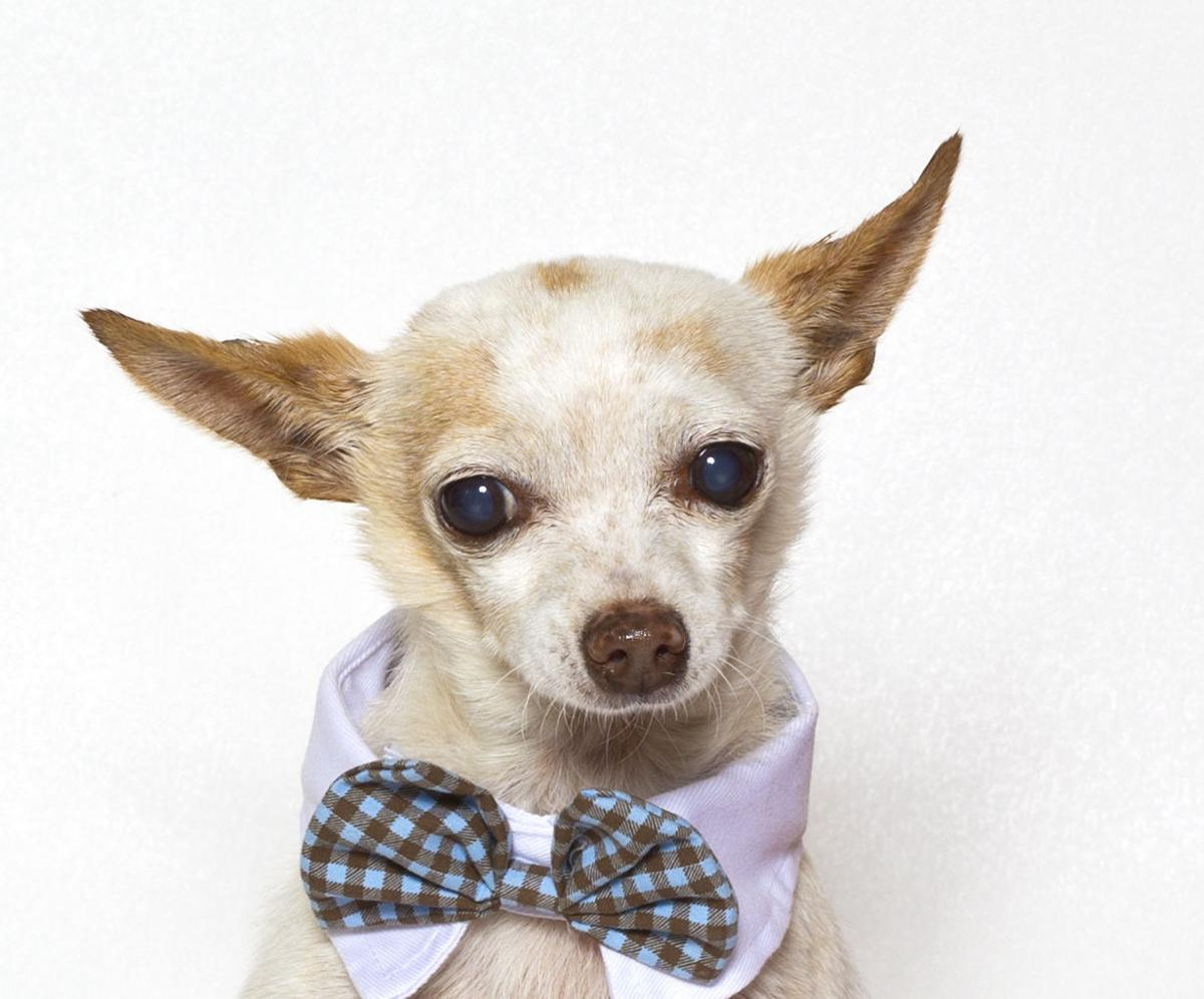 SMVHS Pet of the Week -- Finley