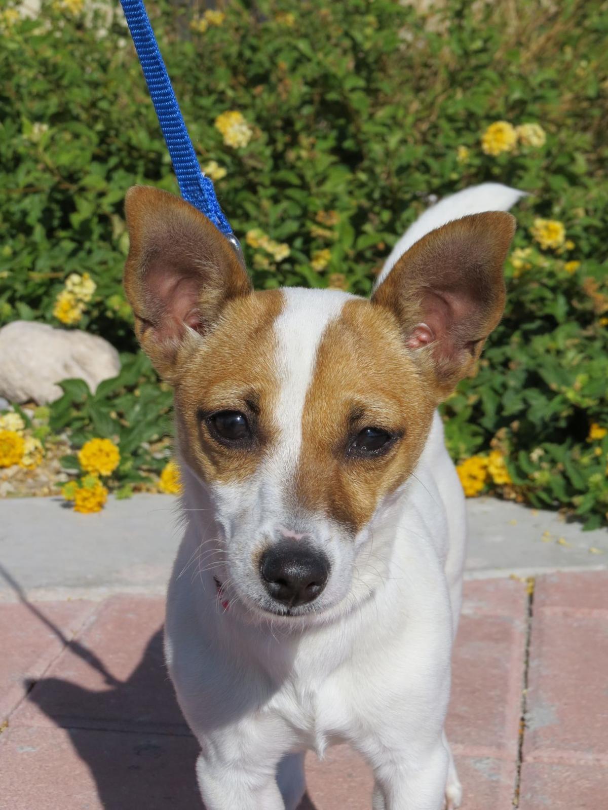 CCSPCA Pet of the Week -- Thomas