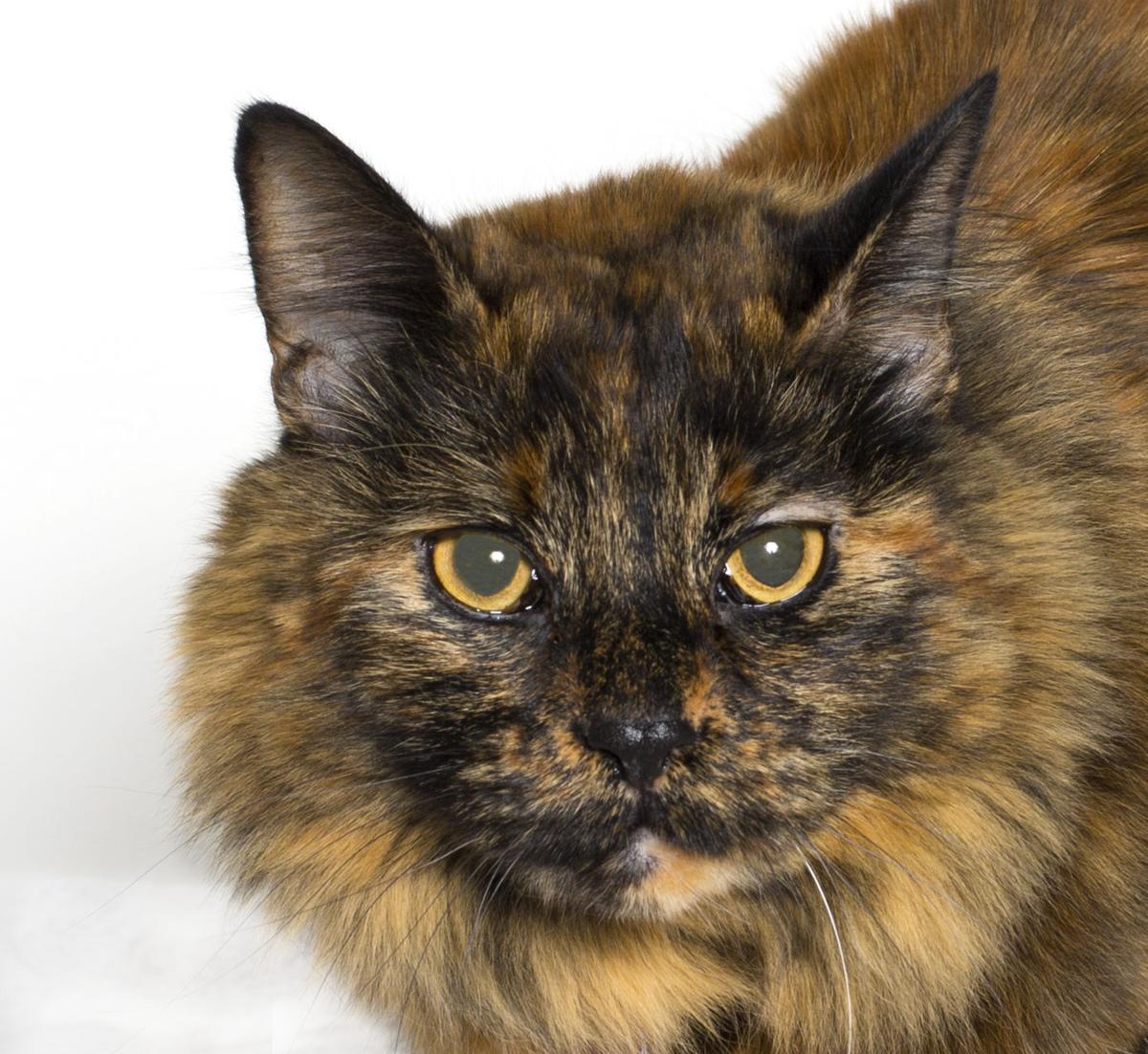SMVHS Pet of the Week -- Morgan