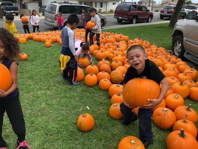 Mary Buren student picks a pumpkin